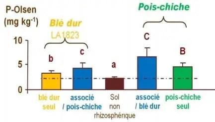 Figure 3 : Disponibilité du phosphore dans la rhizosphère du blé dur, du pois chiche et de leurs associations