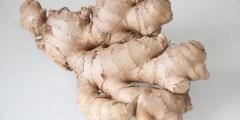 Toxicité du gingembre