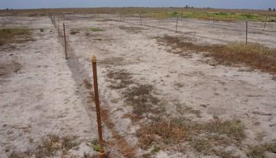 Classification des sols salés