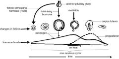 Fécondation et développement embryonnaire