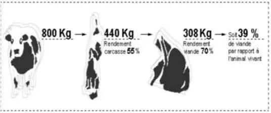 Figure 01: Consommation réelle de la viande