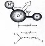 Figure I.2 : Structure angulaire de la molécule d'eau. (Ramade, 1998)