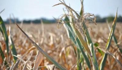 Adaptation des végétaux  au déficit hydrique