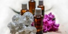 Répartition et localisation des huiles essentielles