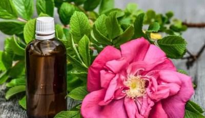 III.8.Principales techniques de détermination de l'activité antimicrobienne des huiles essentielles