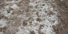 La salinisation des sols
