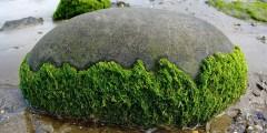 Techniques et procédés de transformation des algues