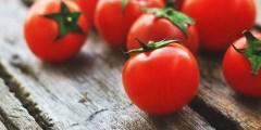 Description botanique de la tomate