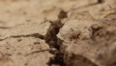 Classification des sols calcaires