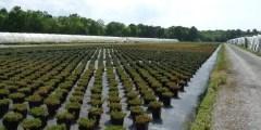 Intérêt de L'élevage des plants en conteneurs par rapport a celui a racines nues