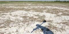 Salinité et sodicité des sols