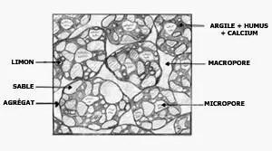 Figure n° 07 : Structure du sol (BAUCHAMP, 1989).