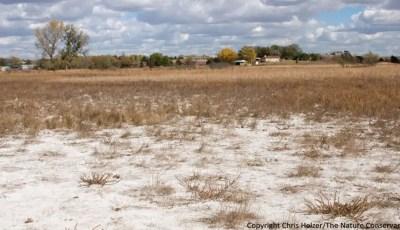 Les conséquences de la salinité  du sol