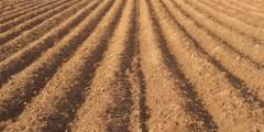 Les phases du sol