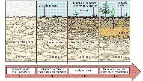 Figure n° 01 : La formation du sol (MERMOUD, 2006).