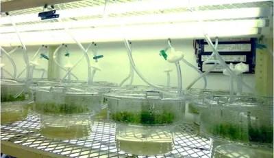 Les techniques de la culture in vitro