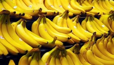 كتاب .. دليل انتاج الموز