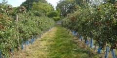 دور الاسمدة المخلبية (Chelate) في نمو محاصيل الفاكهة