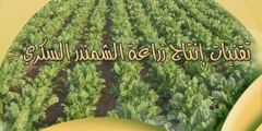 كتاب .. تقنيات إنتاج زراعة الشمندر السكري بالمغرب