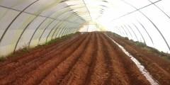 زراعة الخضر في البيوت البلاستيكية ( العدد الأول )