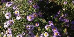 تقسيم النباتات الطبية والعطرية