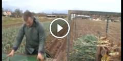 مستقبل الزراعة العضوية