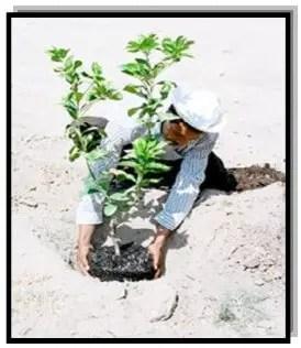 زراعة الشتلات