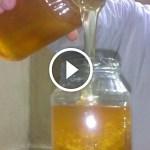 فيديو .. كيفية معرفة عسل النحل المغشوش