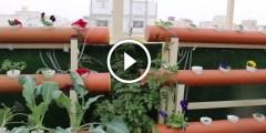 فيديو .. زراعة اسطح المنازل انواع النباتات واهم المعاملات الزراعية