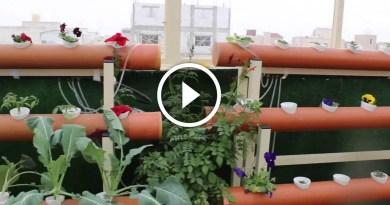 زراعة اسطح المنازل انواع النباتات واهم المعاملات الزراعية