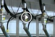 فيديو .. مصانع المراعي للأنتاج الالبان