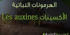 الأكسينات Les auxines