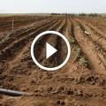زراعة البطاطس طرق تجهيز الارض قبل البدء فى الزراعة