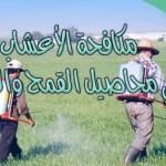 كتاب مكافحة الأعشاب في محاصيل القمح والشعير