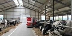 تغذية الأبقار الحلوب