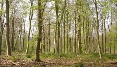 كتاب الغابات الجزء الأول