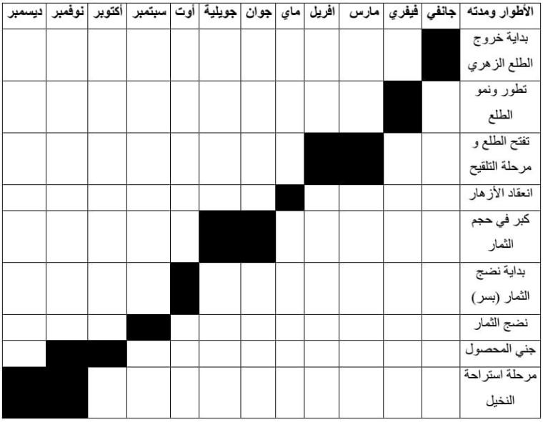الجدول (1) : يوضح  الدورة الحولية لشجرة نخيل التمر (BELGUEDJ, 2002).