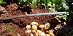 كتاب تحليل التربة والنبات