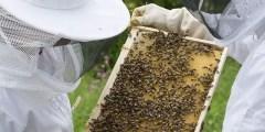 كتاب آفات نحل العسل 2