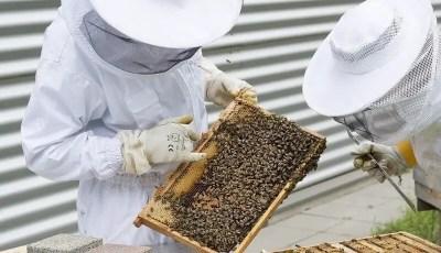 كتاب .. تربية النحل بالطرق العصرية