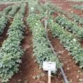 التجارب الزراعية