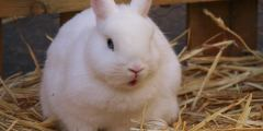 كيف تؤسس مشروع أرانب ناجحا ؟