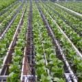 الرى الموضعي Localized Irrigation