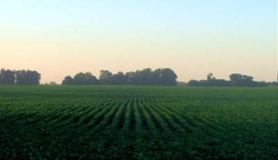 الزراعة الكثيفة Intensive cropping