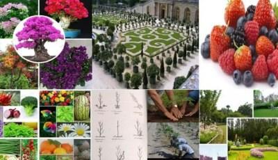 كتاب مبادئ علم البستنة وهندسة الحدائق