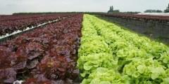 تأثير التربة في نمو المحاصيل البستنية أهم المعاملات الزراعية المثلى لزراعة المحاصيل