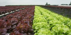 أهم المعاملات الزراعية المثلى لزراعة المحاصيل