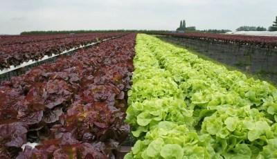 تأثير التربة في نمو المحاصيل البستنية