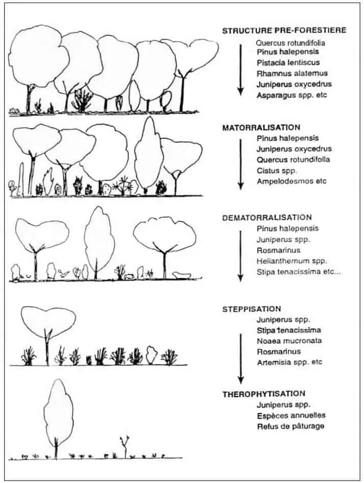 شكل (1) :مستویات تآكل التنوع النباتي في المغرب( 1988، Quézelفي 2000، Quézel).