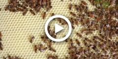 فلم وثائقي عن عالم النحل